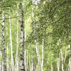 Generic Tree Advice
