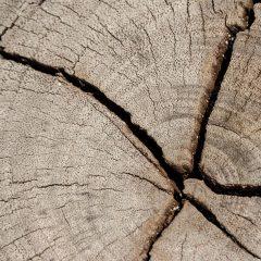 Tree Preservation Orders (TPO)