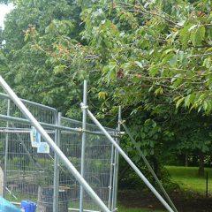 Development Site Tree Surveys (BS 5837)